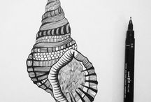 Seashell drawings