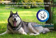 Productos para Mascotas / Compra-venta de Productos para Animales y Mascotas