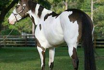 will horses