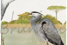 Illustrazioni di animali e paesaggi. / E' una bacheca dedicata agli animali, spesso ritratti nell'ambiente in cui vivono. Sono illustrazioni ad acquarello e a tratto in bianco e nero, adatti a molti tipi di utilizzo.
