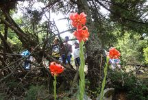 Flowers and plants of Mount Parnes! / Meet the different kind of plants and flowers that can be found on Mount Parnes!