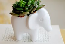 Miniatural, Deco & Plants / cuuuuuute, cute