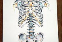 arte anatomia
