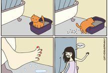 Kit Cats
