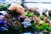 Reef Aquariums and related coolness / Beautiful saltwater aquariums with invertebrates