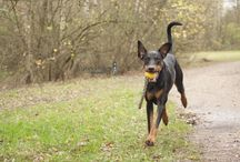 Honden / door mij op de foto gezette honden