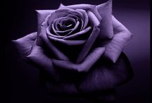 Purple / by Antonella Banno