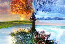 évszak fa