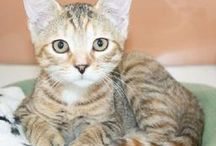 I want a cat... / by Jenna Fyre-Drake