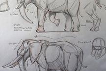elephant anatomy