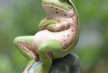 frogs / by Cherie Hodges