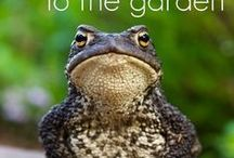Toad Houses and Healthy Gardens
