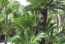 jenis palm