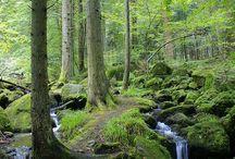 Schwarzwald Black Forest Germany