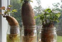 Plantas que crescem na água