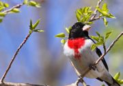 Learn About Nests