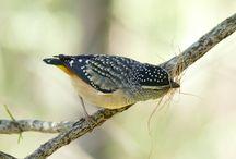 Animals - Ocells