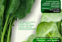 Pharmacognosy - medicinal plants