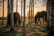 My own pictures / Horses horse photoshoot sweden