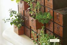 Decoración con plantas. / Las plantas, arbustos y flores naturales siempre traen vida a tus estancias además de purificar el aire y llenar los espacios con una sensación de frescura. La intención de decorar nuestras casas con estos elementos es atraer esas características a dichos espacios.