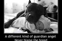 "All things Bully / ""Pit Bull"" / All different kinds of Bully's, Pit Bulls & ALL that fall under the ""type"""