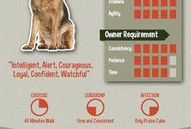 Puppy info
