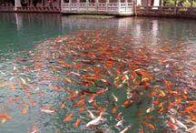 Lijiang Attractions / Lijiang Attractions
