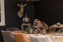 Opgezette dieren / Wij hebben in onze winkel een grote collectie opgezette dieren en geweien om uw woonhuis helemaal te decoreren in de landelijke stijl.