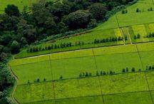 Tea plantation in Kericho county Kenya #HeathrowGatwickCars.com
