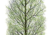 Подача деревья зелень