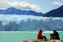 Calafate (Glaciar Perito Moreno)