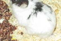 meine eigenen Hamster / Emma & Yoda