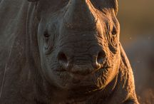 Rhino`s