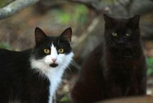 Cats! / by Holy Cow! Vegan Recipes