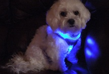 Dog-E-Glow Dogs / Send us a picture of your dog in a Dog-E-Glow Leash, Collar, or Harness, and we might post it here.  / by Dog-e-Glow