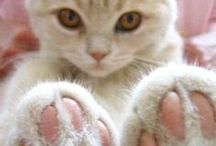 Cats' Paws / From their little bean toes to their wonderful markings, who doesn't love cats' paws?