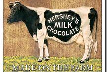 Hershey Chocolate Ride Cows