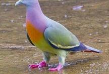 Animals-Birds