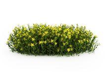 VIZ plants