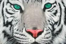 Oroszlánok tigrisek