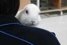 cute animals / cute cute cute....