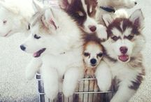 Funny Cute Dogs