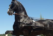 Horse Photography by Karen Brenner