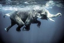 Elephants / by Julie Didion