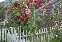 how does my garden grow.  / by Yolanda Hickman
