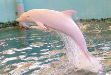 delfíni, dolphins