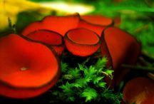 Mushrooms and Plants
