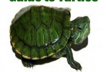 Turtle Time / Exploring turtle ideas for youngest son