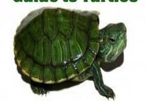 Żółw!!!