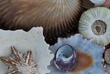 She sells Sea Shells